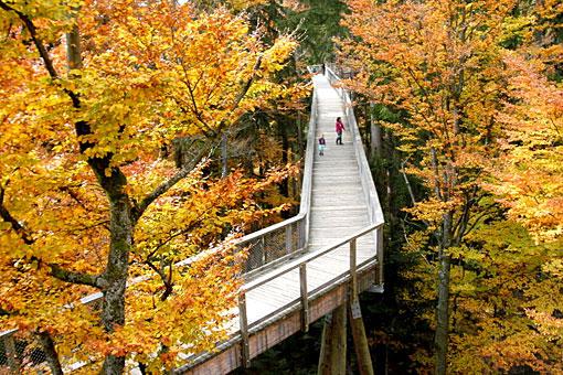 Baumwipfelpfad Freizeitmöglichkeit in der Urlaubsregion Bayerischer Wald