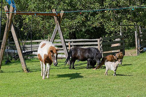 Tiere auf dem Bauernhof in Waldkirchen