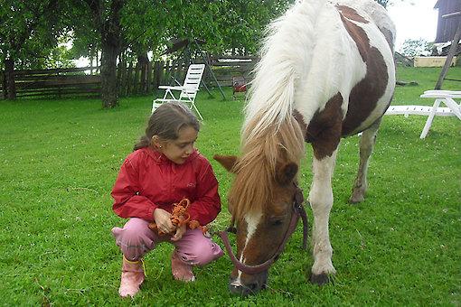 Bauernhof mit Ponys in Bayern